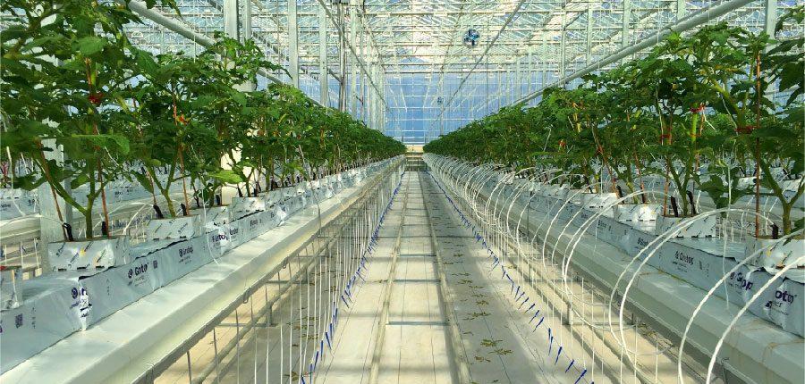 Greenhouse Retrofit