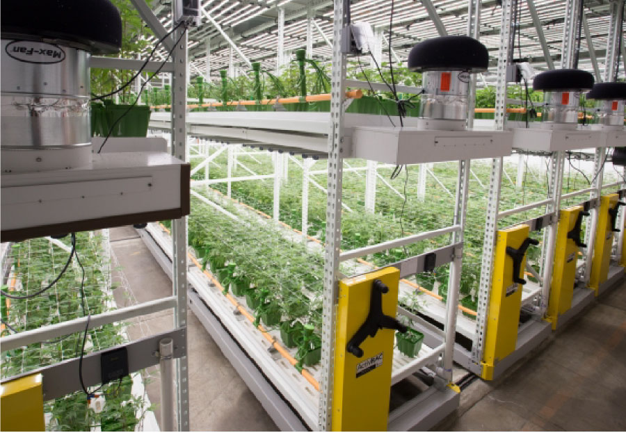 CAMP Cannabis Cultivation