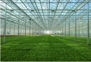 Lettuce Cultivation Facility